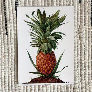 "Vintage Style Pineapple Glossy Fine Art Print 5x7"""